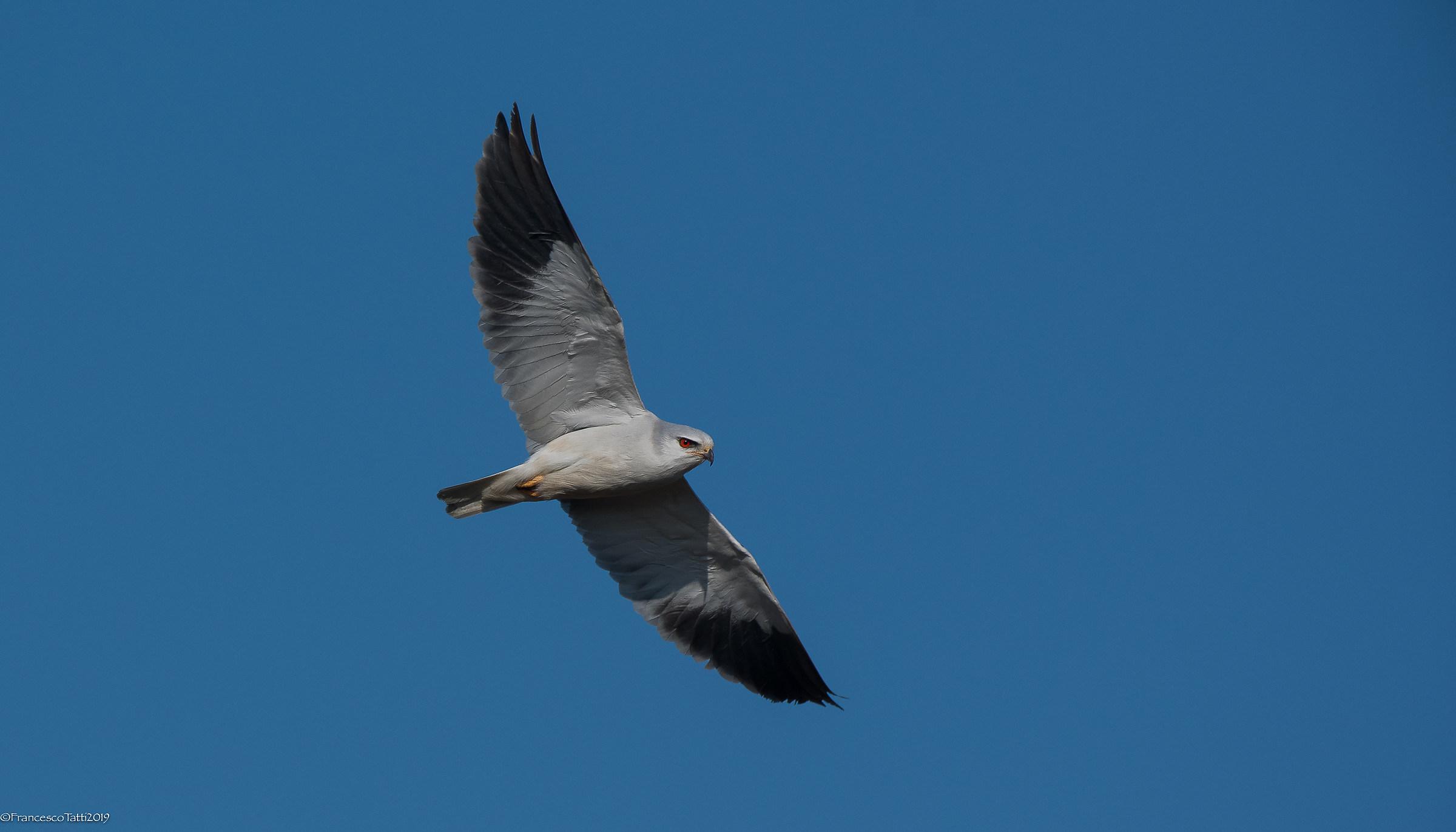 White Kite...
