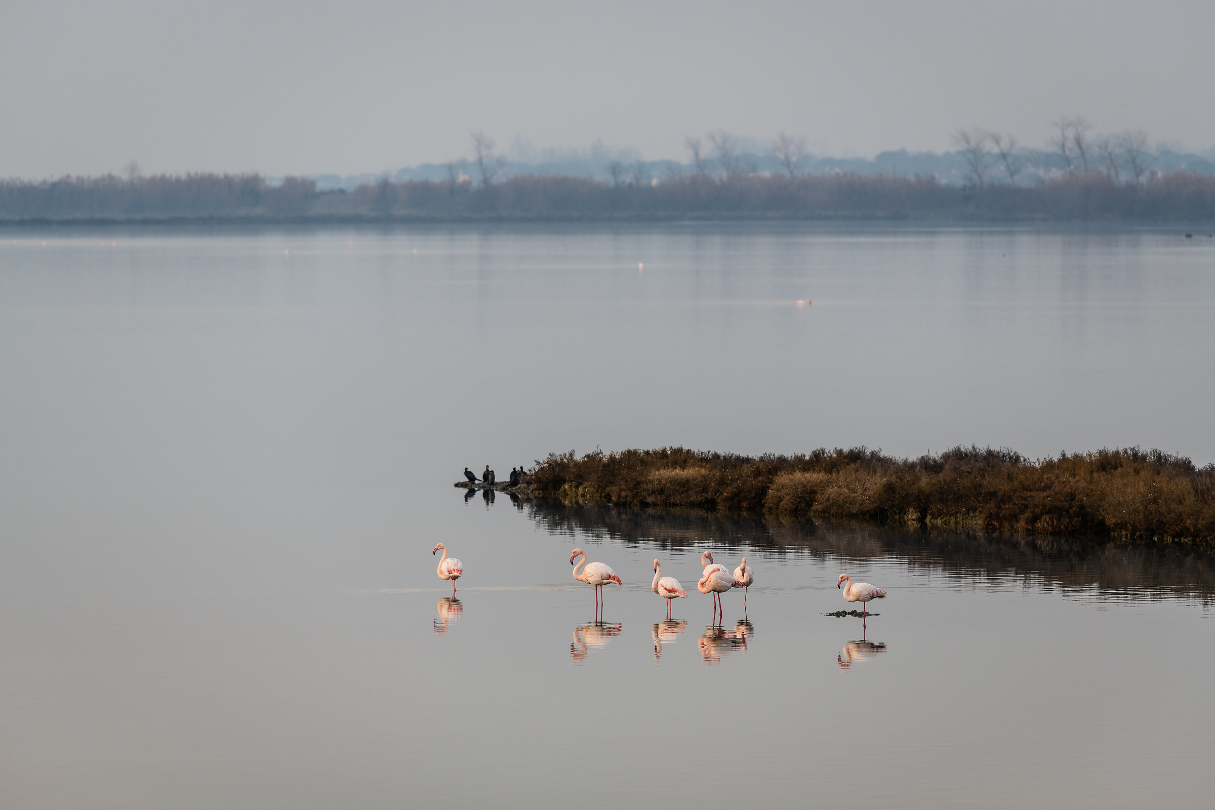 January with Flamingos...
