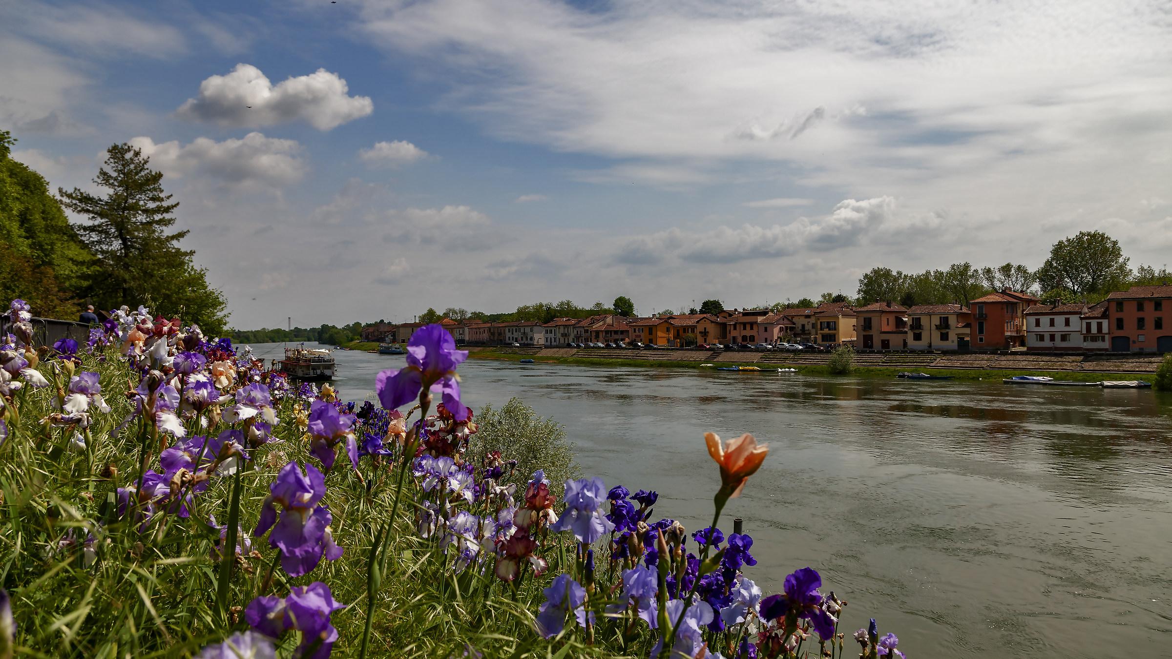 Ticino in fiore...