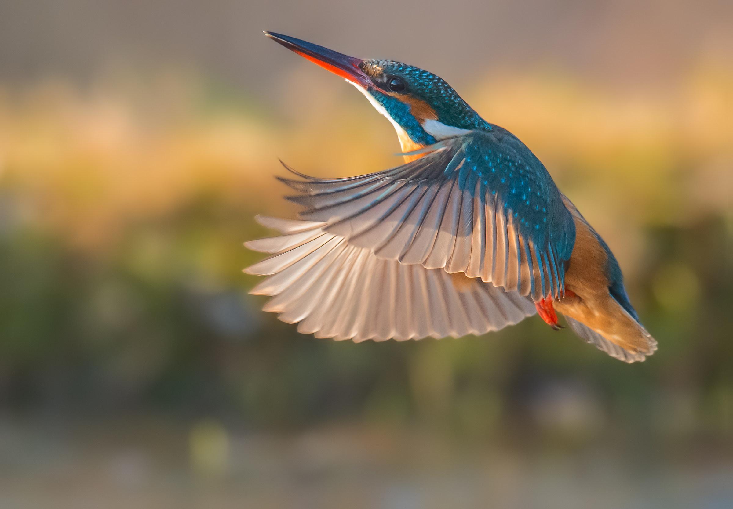 In flight...