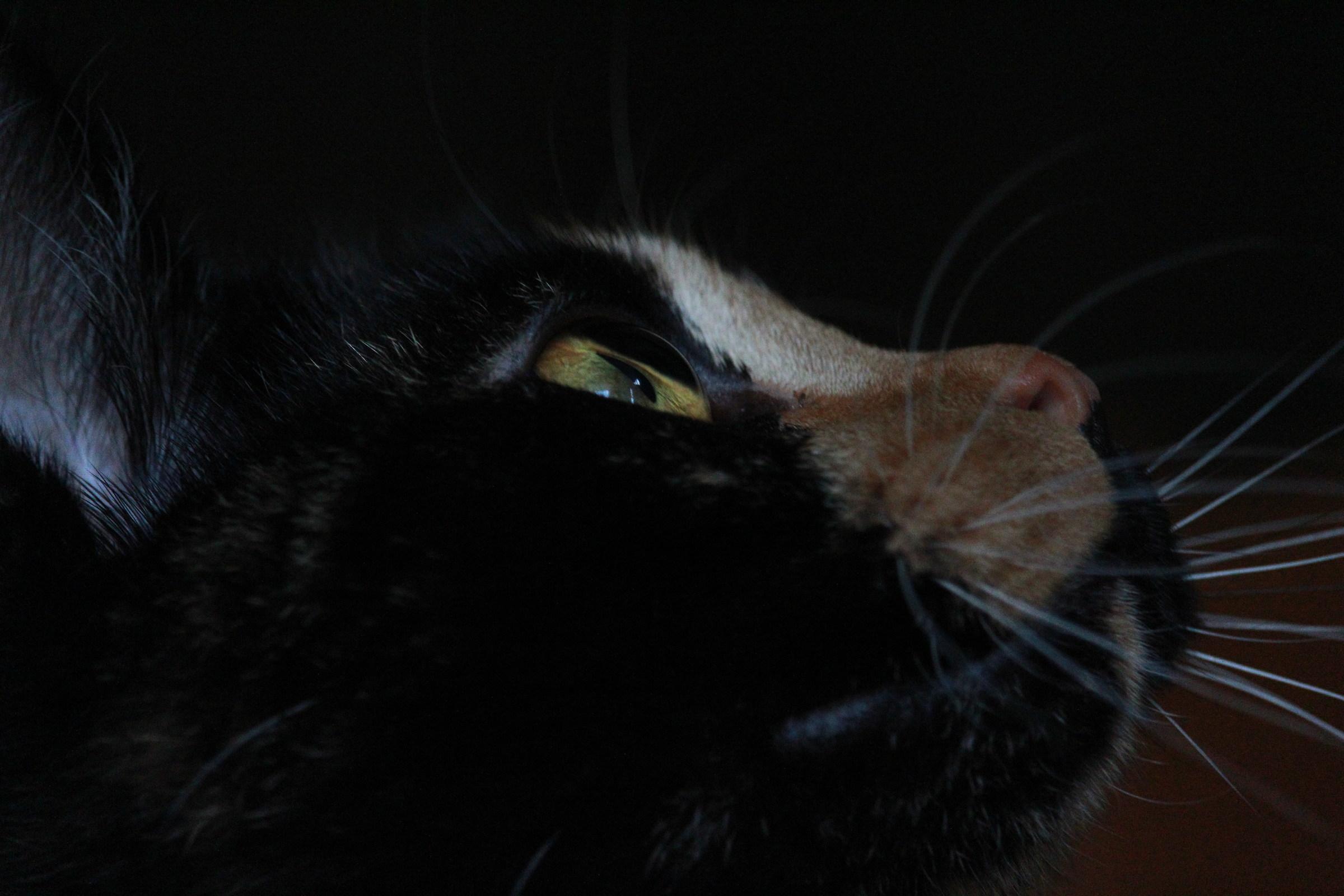 Italian Cat...