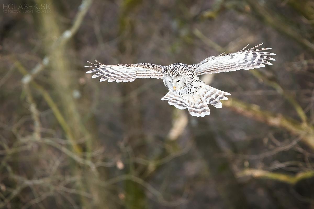 Flying hunter...