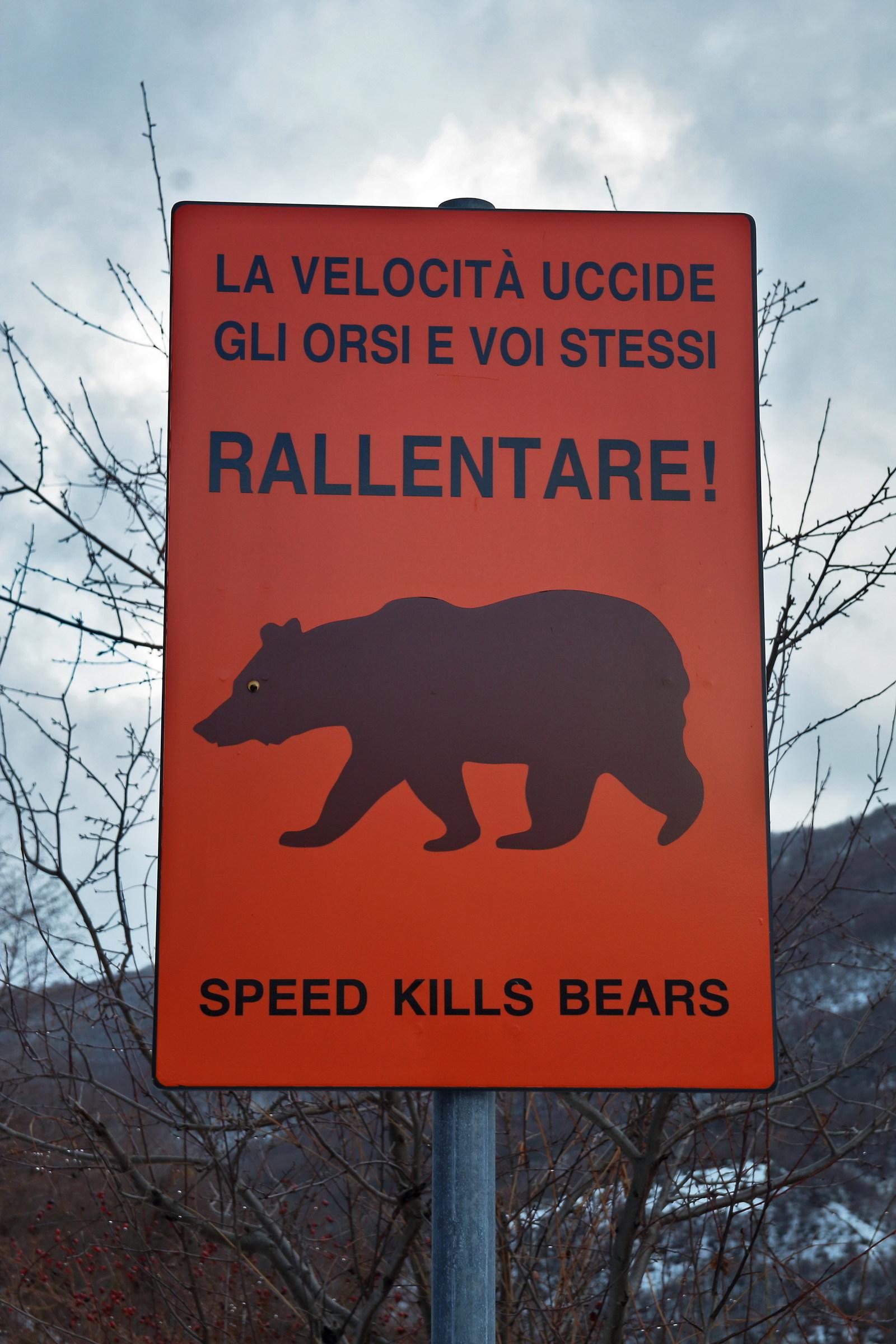 speed kills bears...