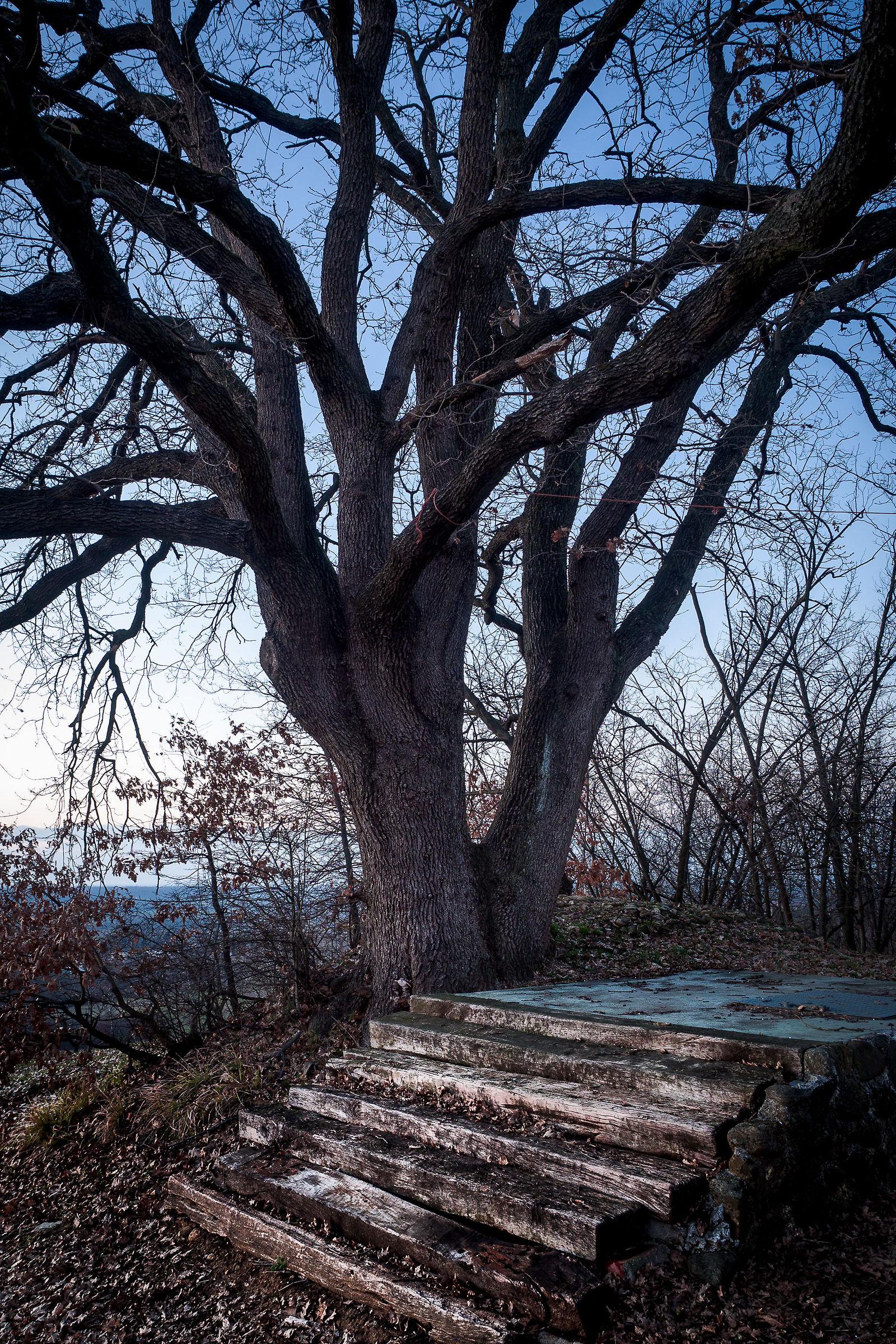 Oak Ramp......
