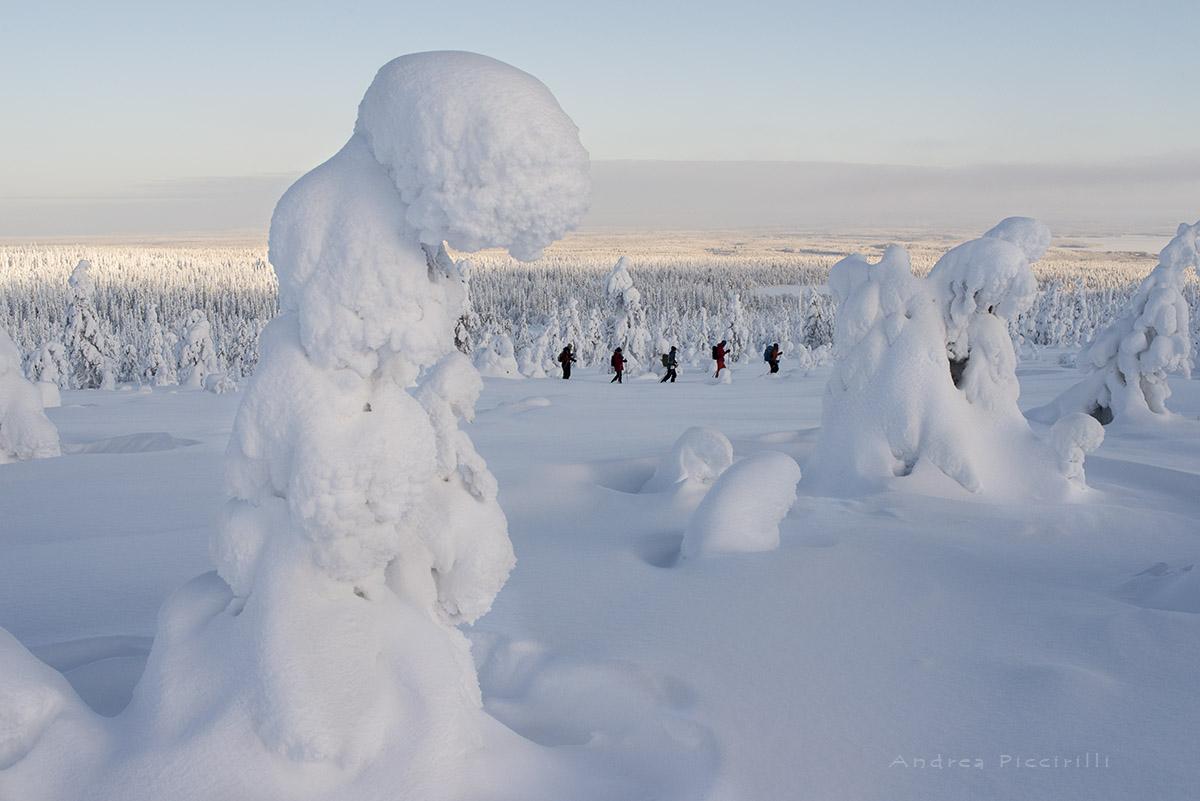 Lapland emotion...