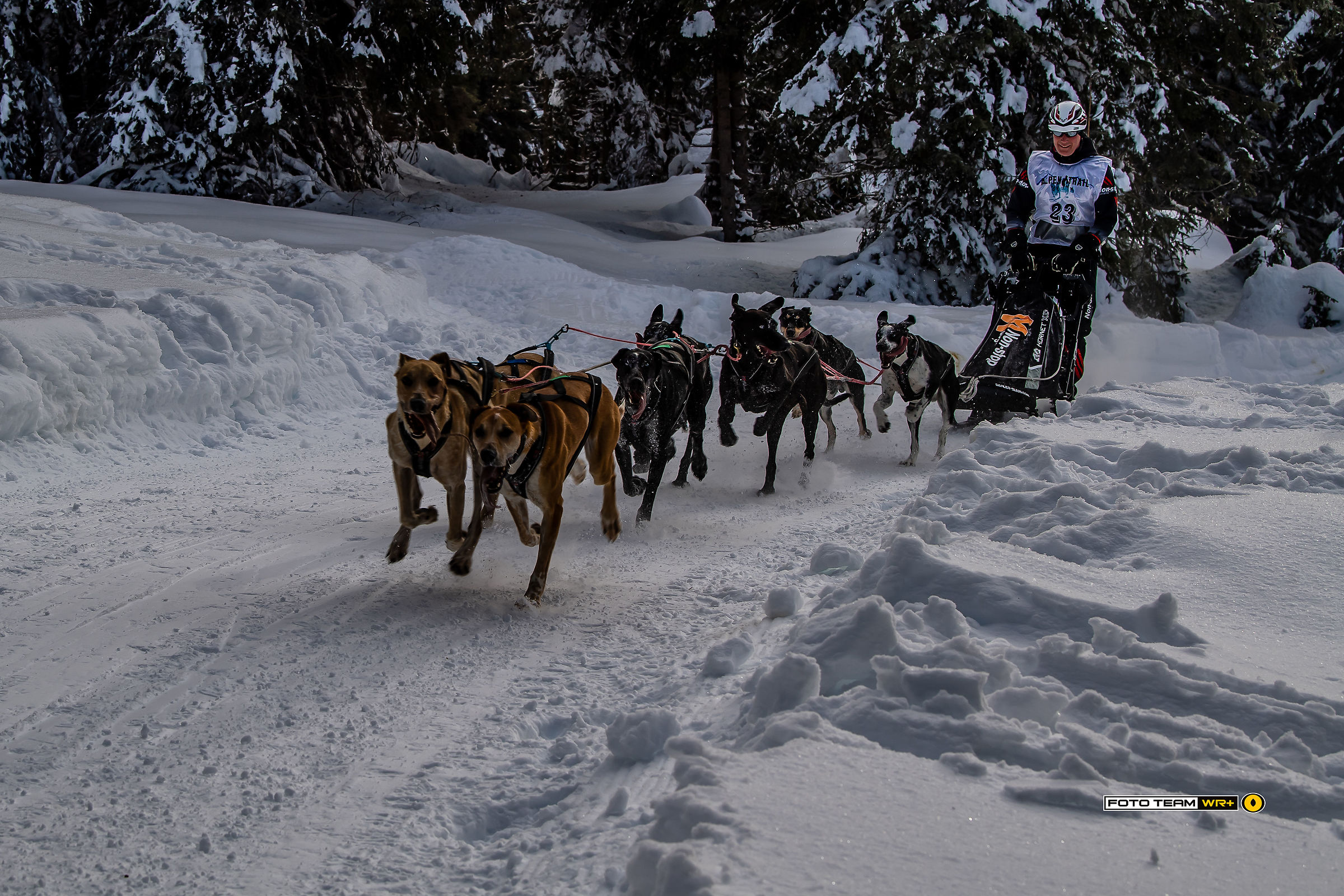 Race for sled dogs in Sesto...