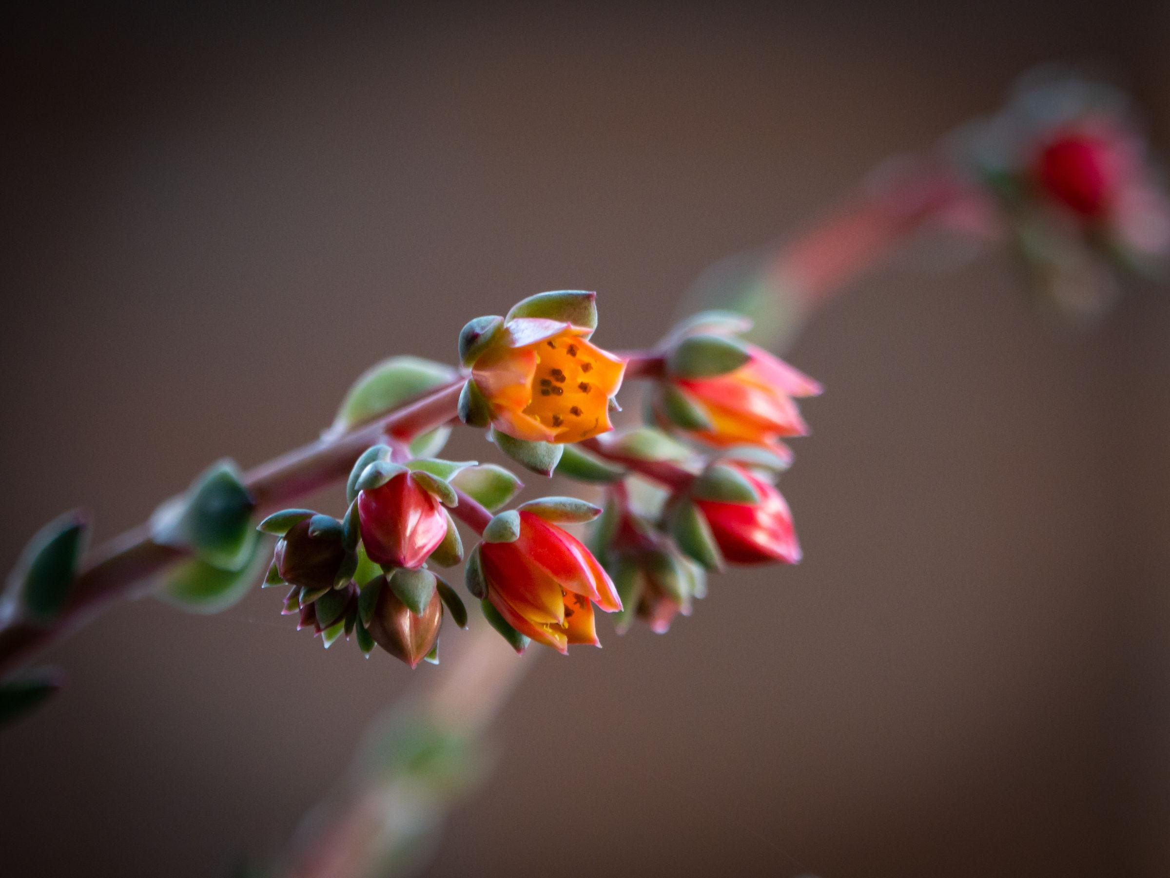 Pianta fiorita in giardino...