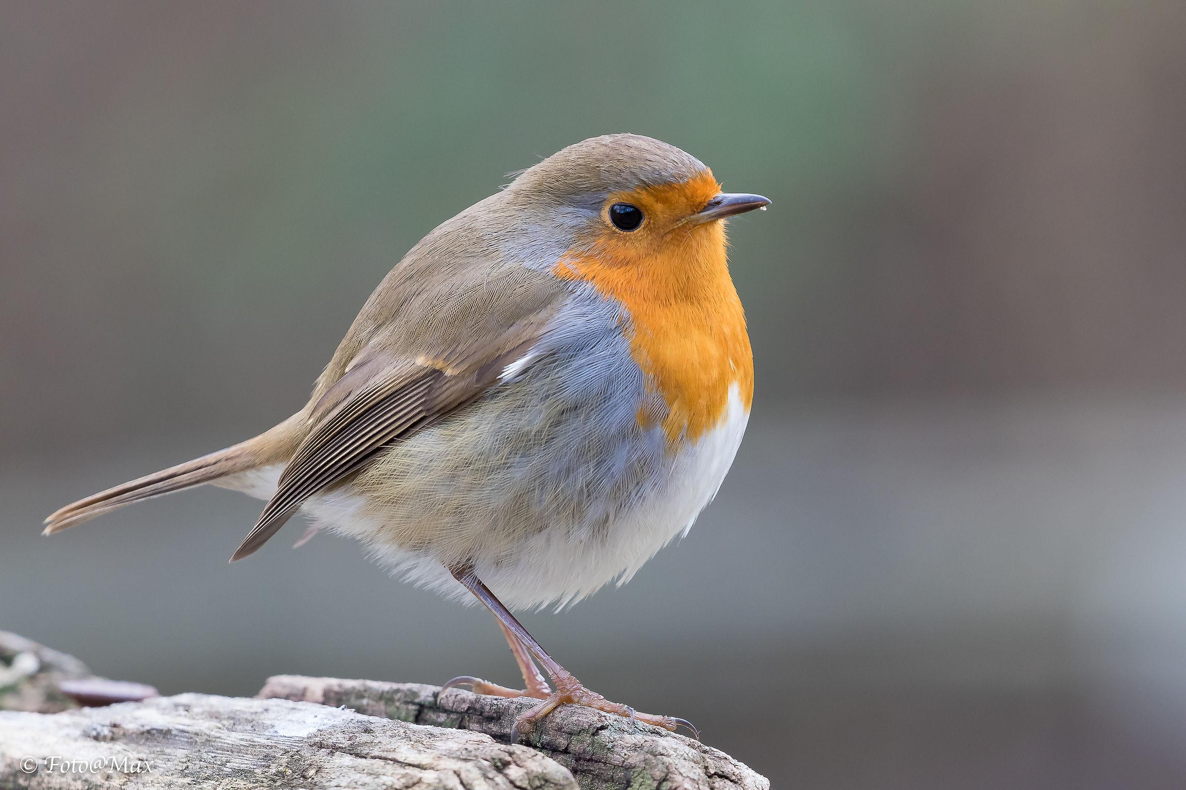 Friend Robin ...