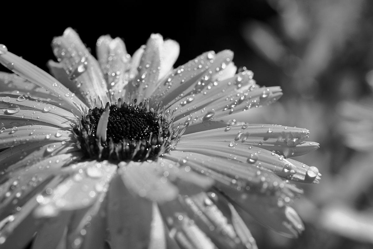 Bianco e nero by juzaphoto for Foto hd bianco e nero