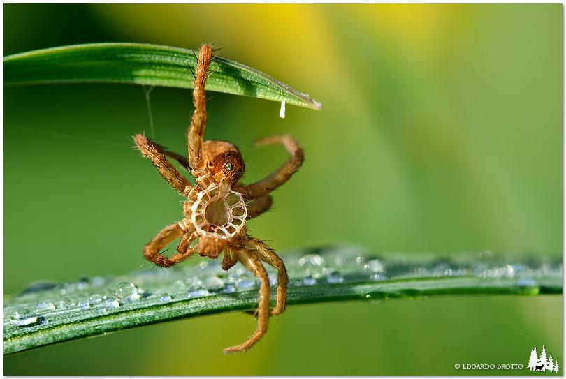 Spider Wrap...