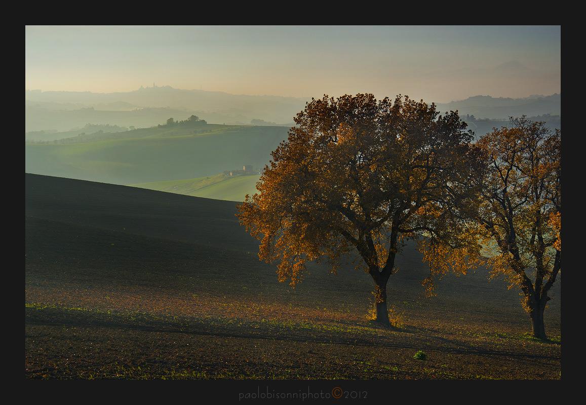 Oak Trees...