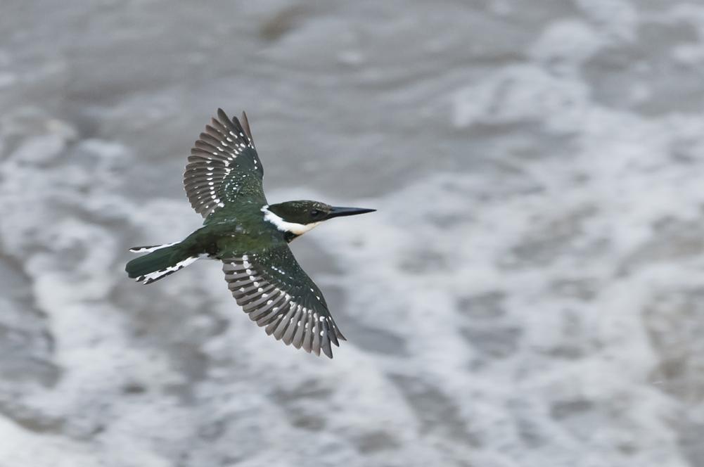 Green Kingfisher Modifica...