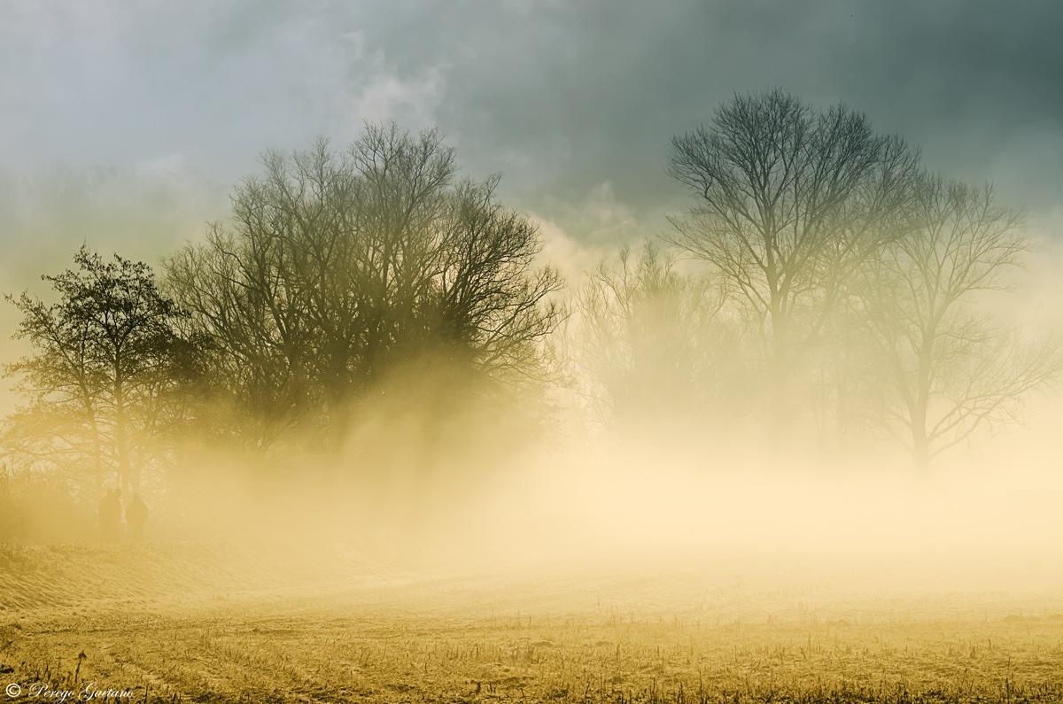 misty dawn...