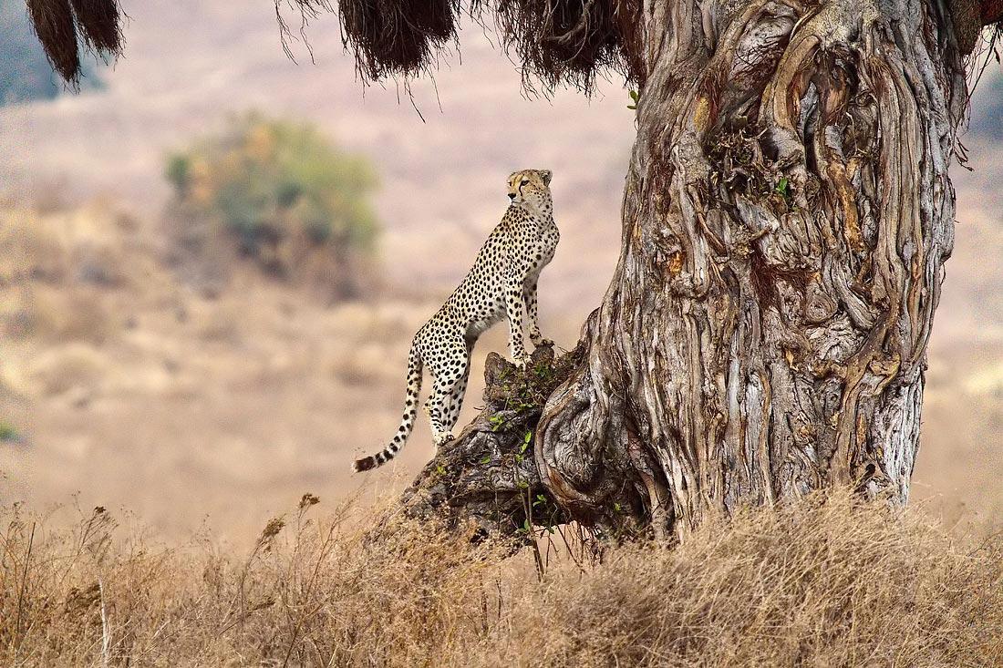 Ngorongoro-Tanzania-Un'occhiata in giro....