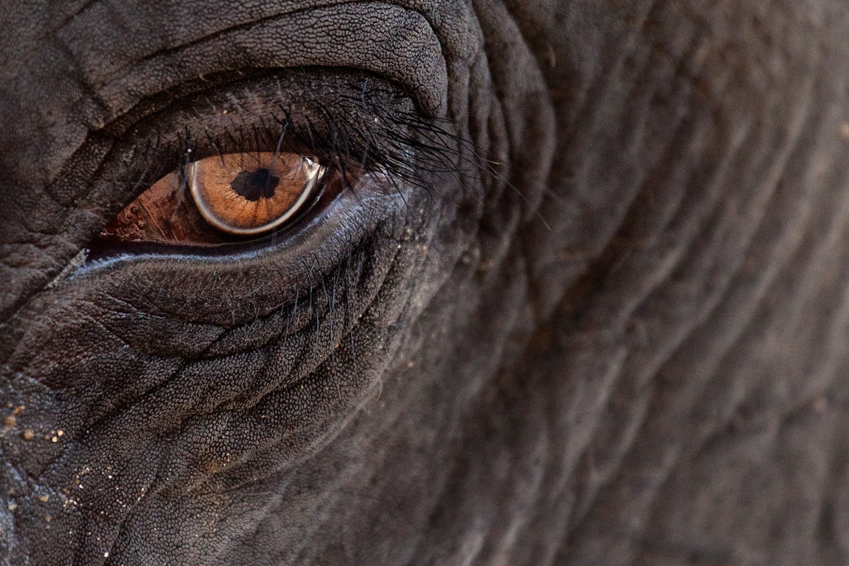 The eye of the elephant...