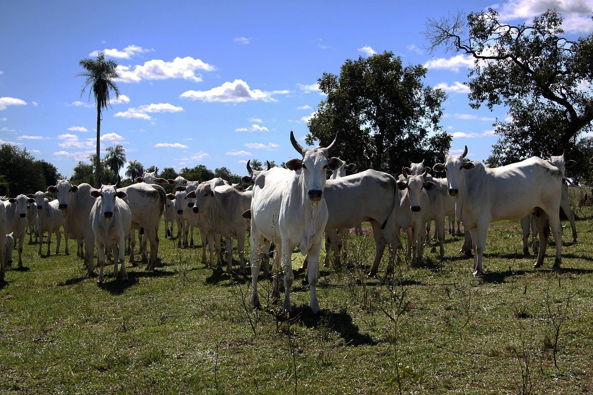 Mato Grosso do Sul...