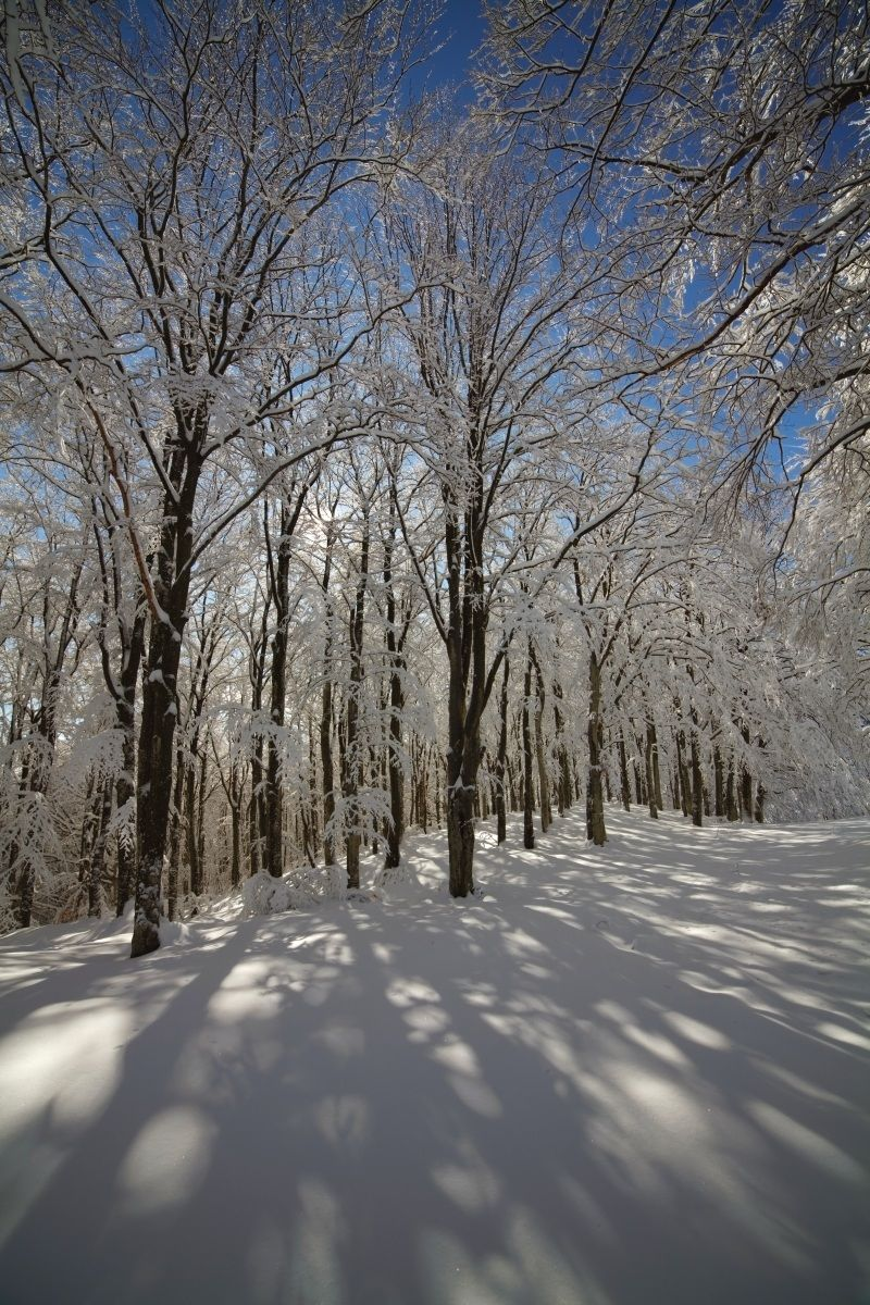 Snowy forest - Piacenza Apennines...