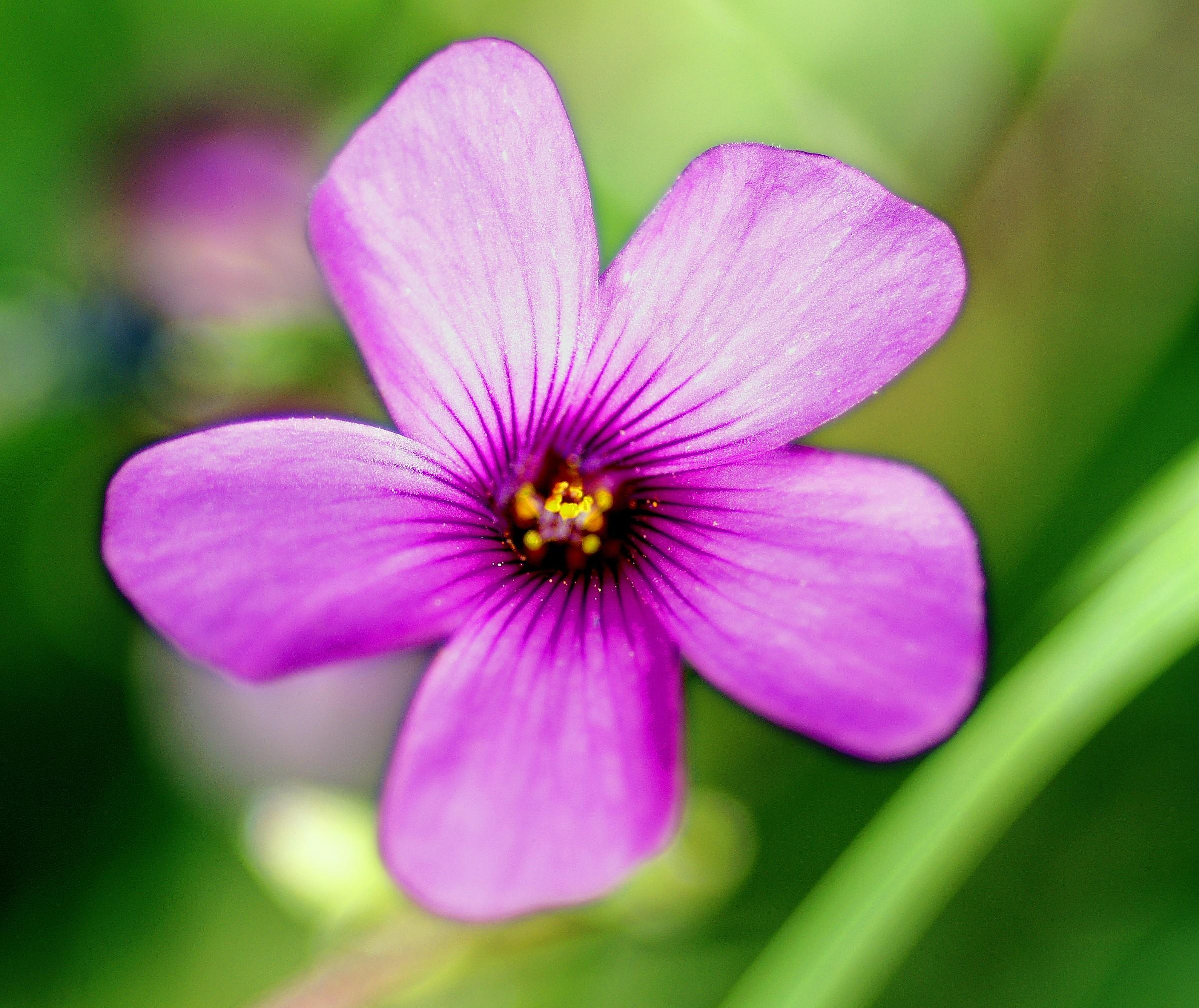 Floret...