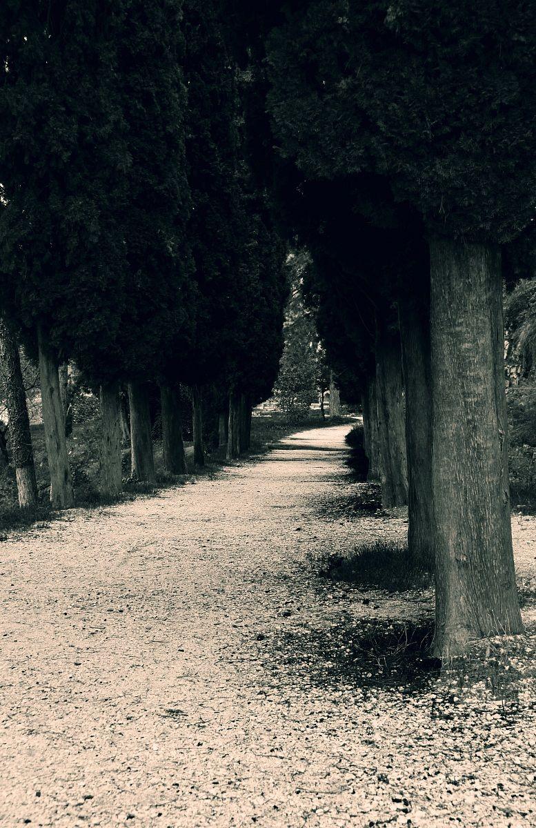Viale del castello...