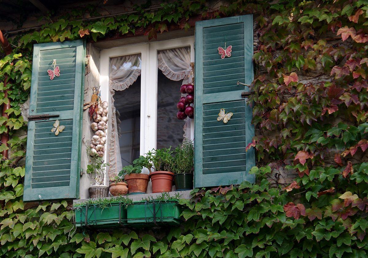 the window .......