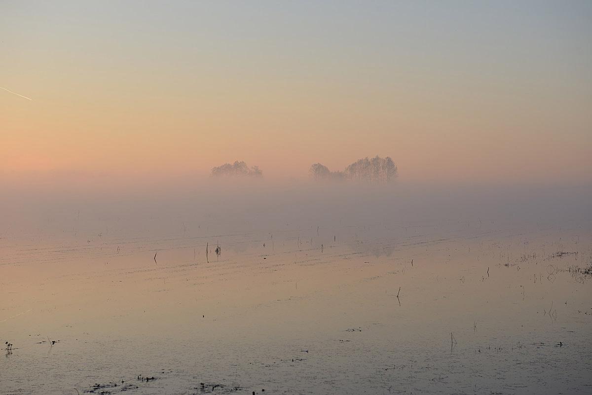 dawn in marsh...