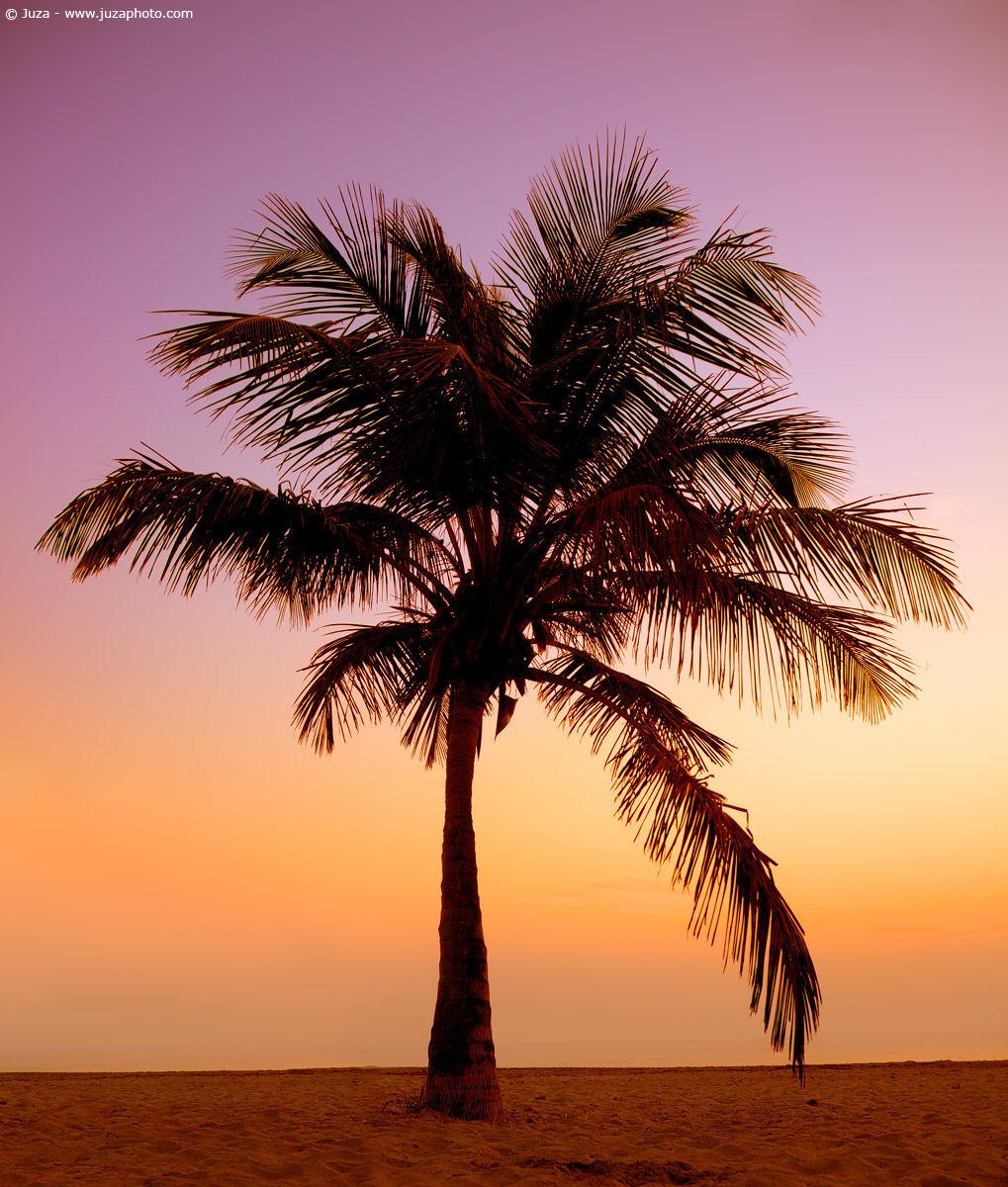 Palma all 39 alba 007515 juzaphoto - Compro vendo regalo la palma ...