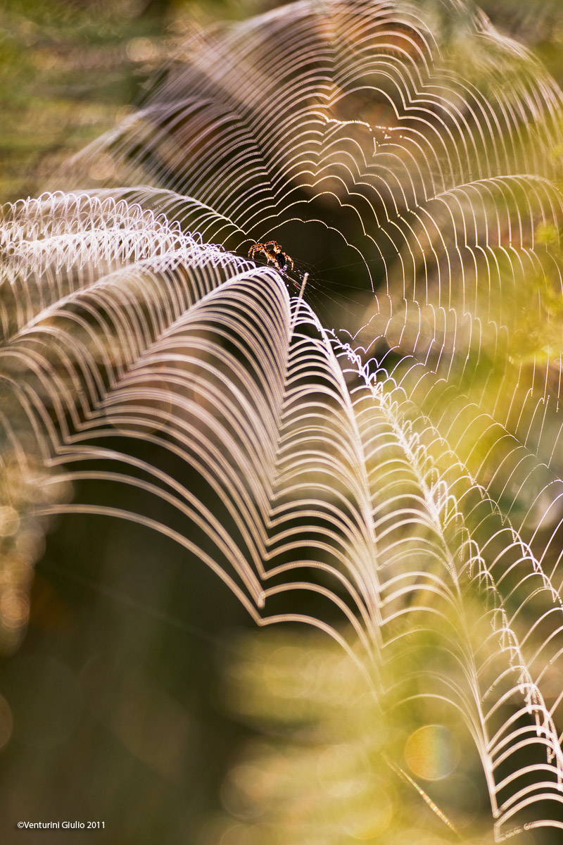 Spider in backlight...