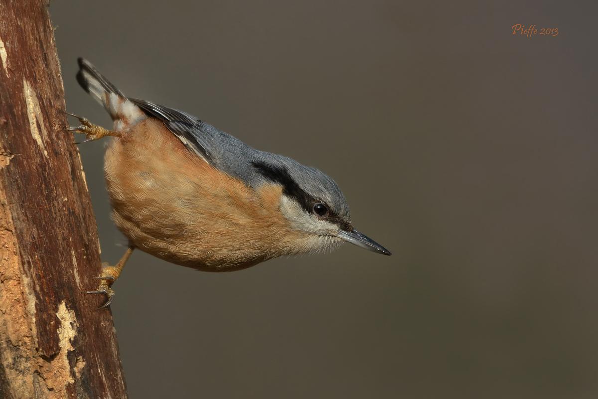 Woodpecker Mason ......