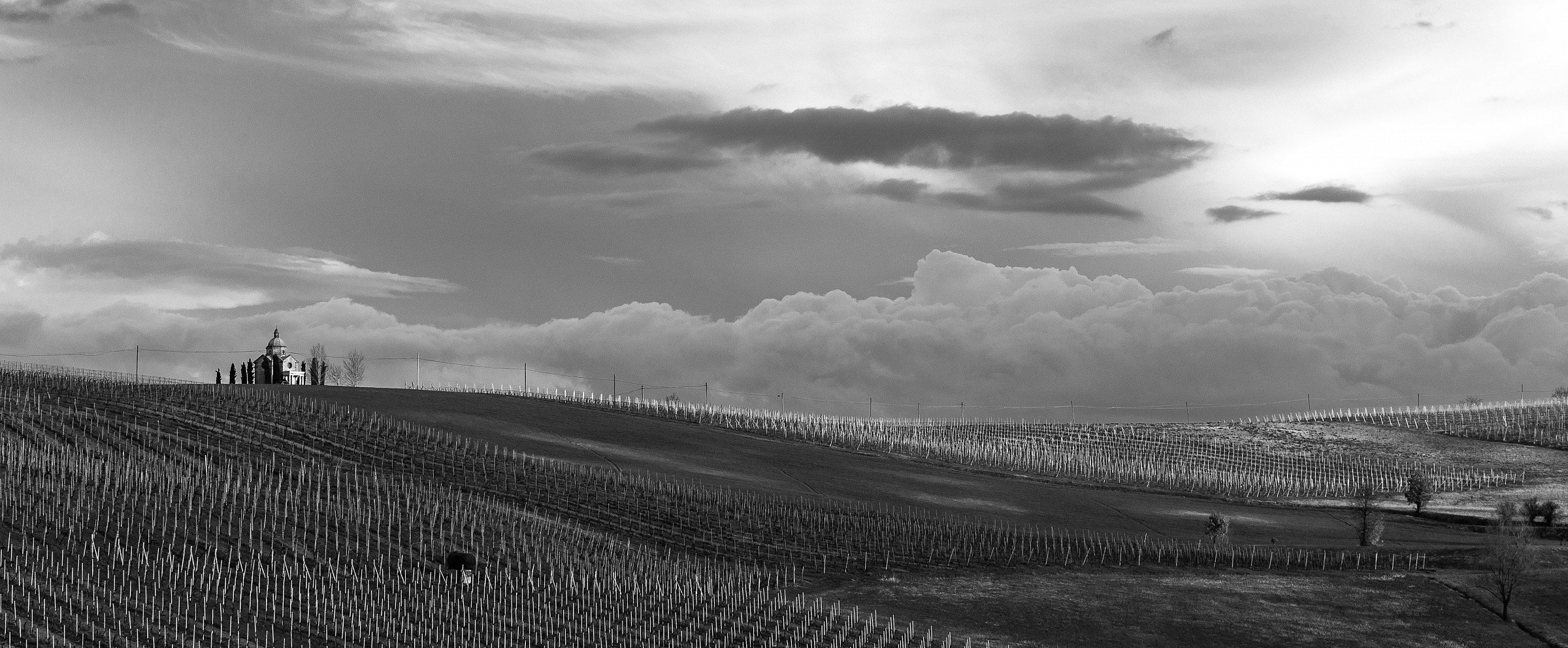 Vineyards of Piacenza after the rain - Overview...
