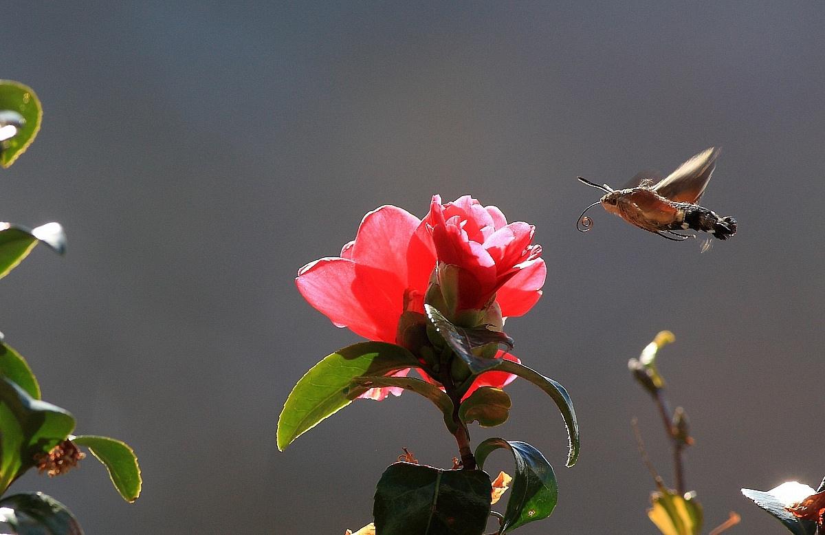 Pretty insect proboscis (?)...