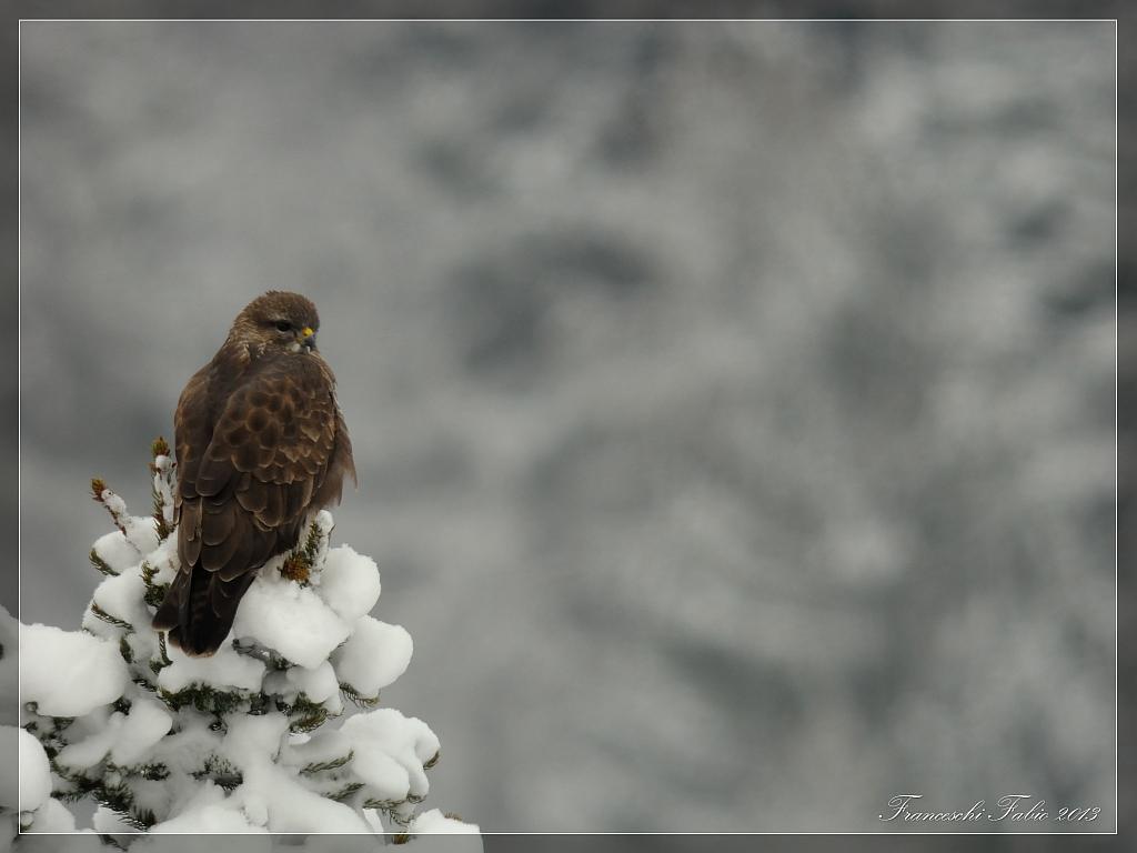Peering in the snow!...
