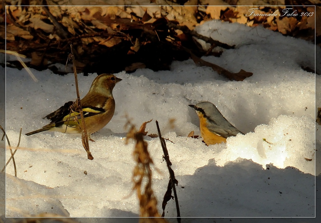 Nuthatch and Chaffinch...