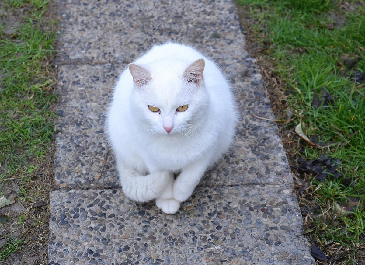 gatto3...