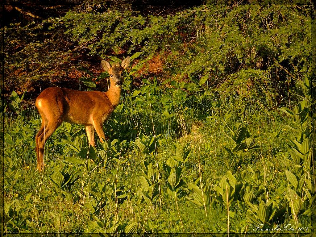 Young deer!...