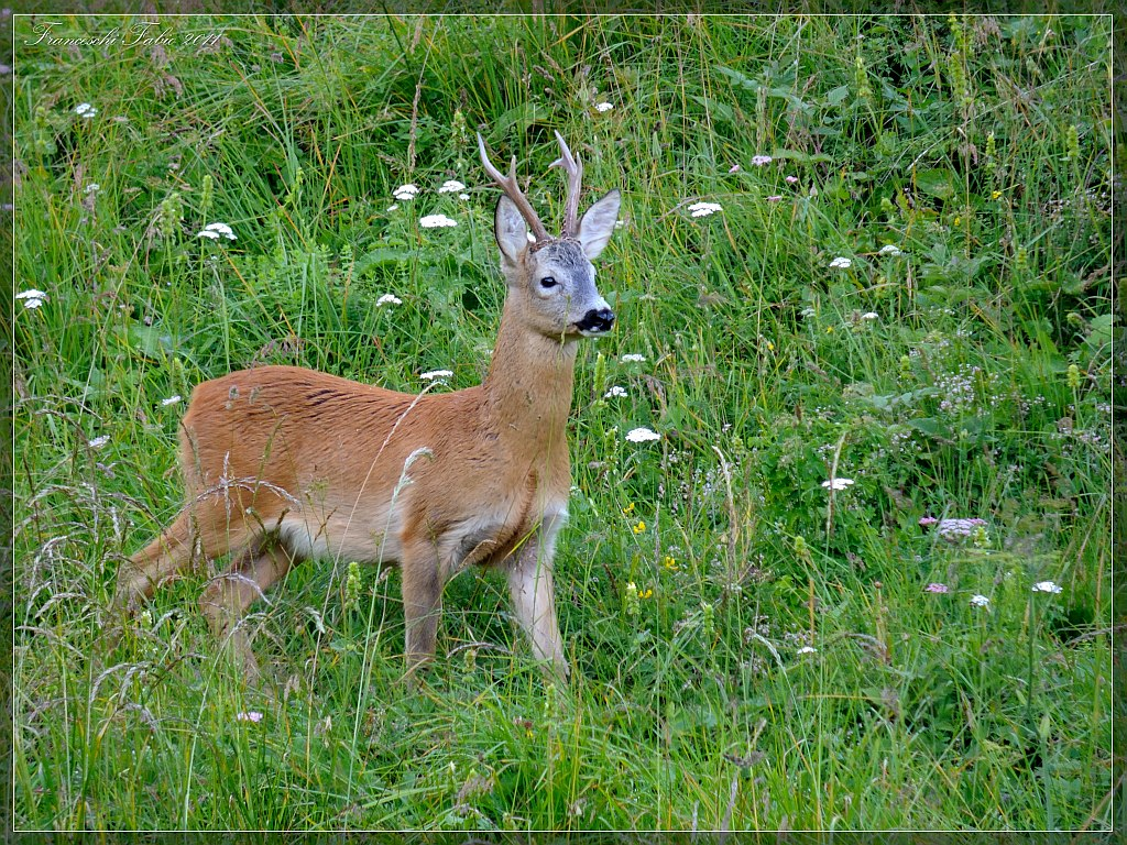 Time loves the deer!...