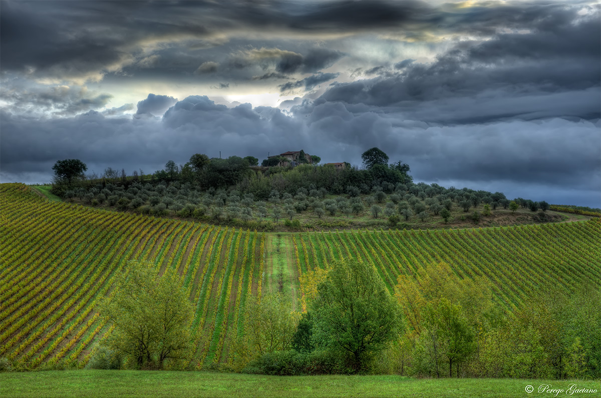 Vineyards and olive trees Umbrians HDR version...