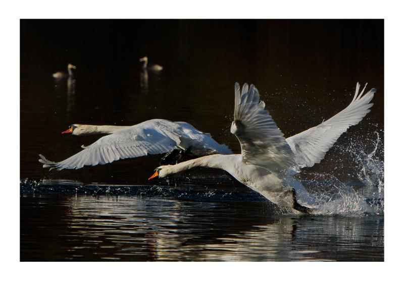 flight territorial...