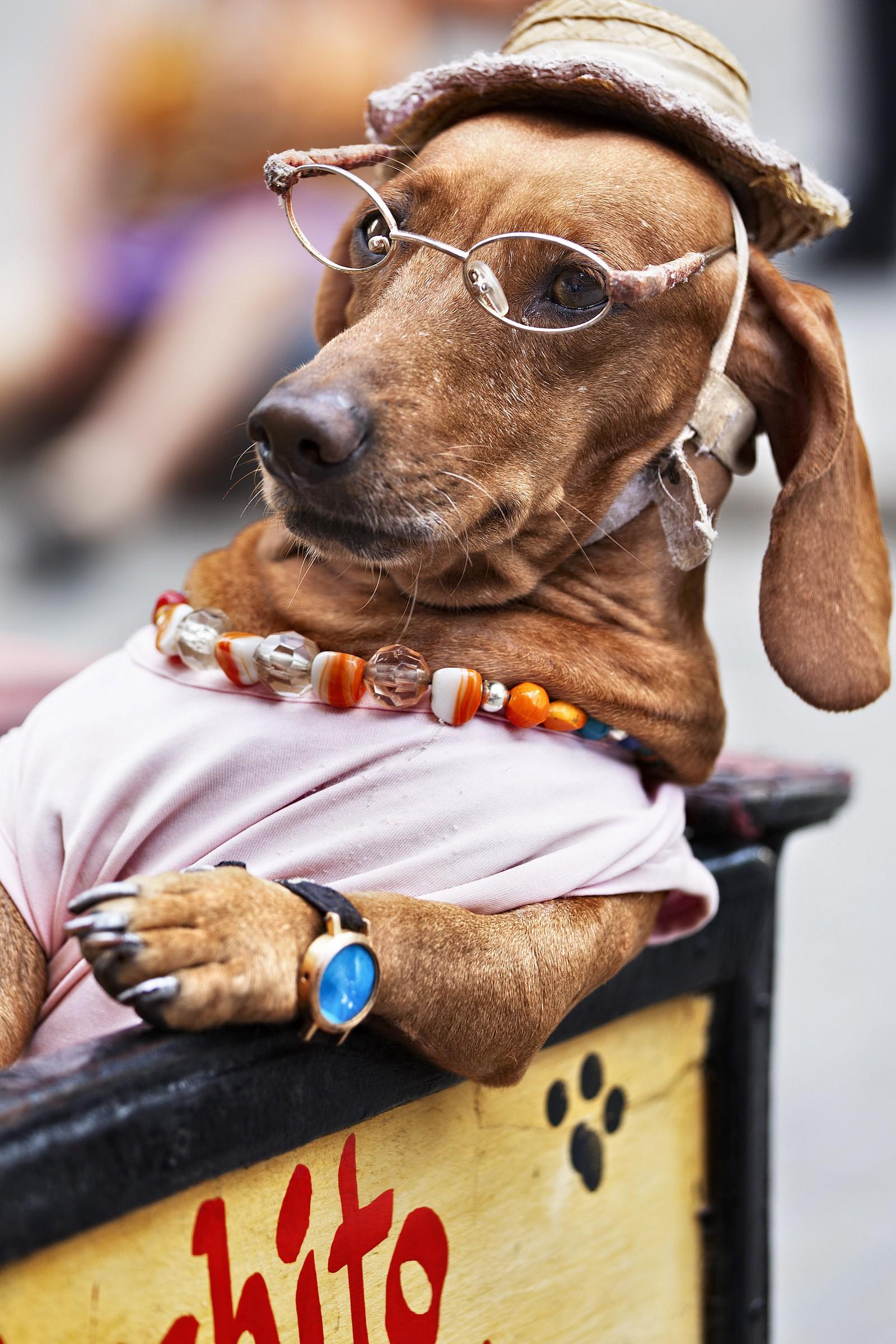 Mr. Dog...