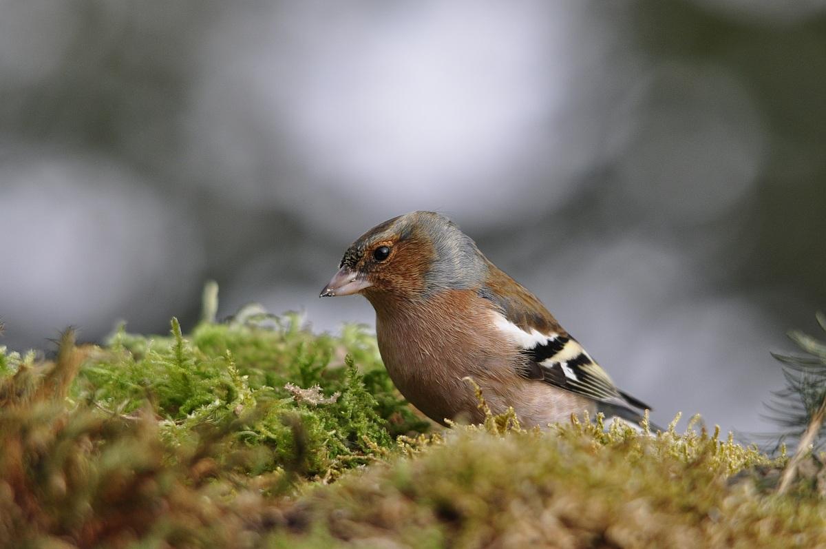 Finch...