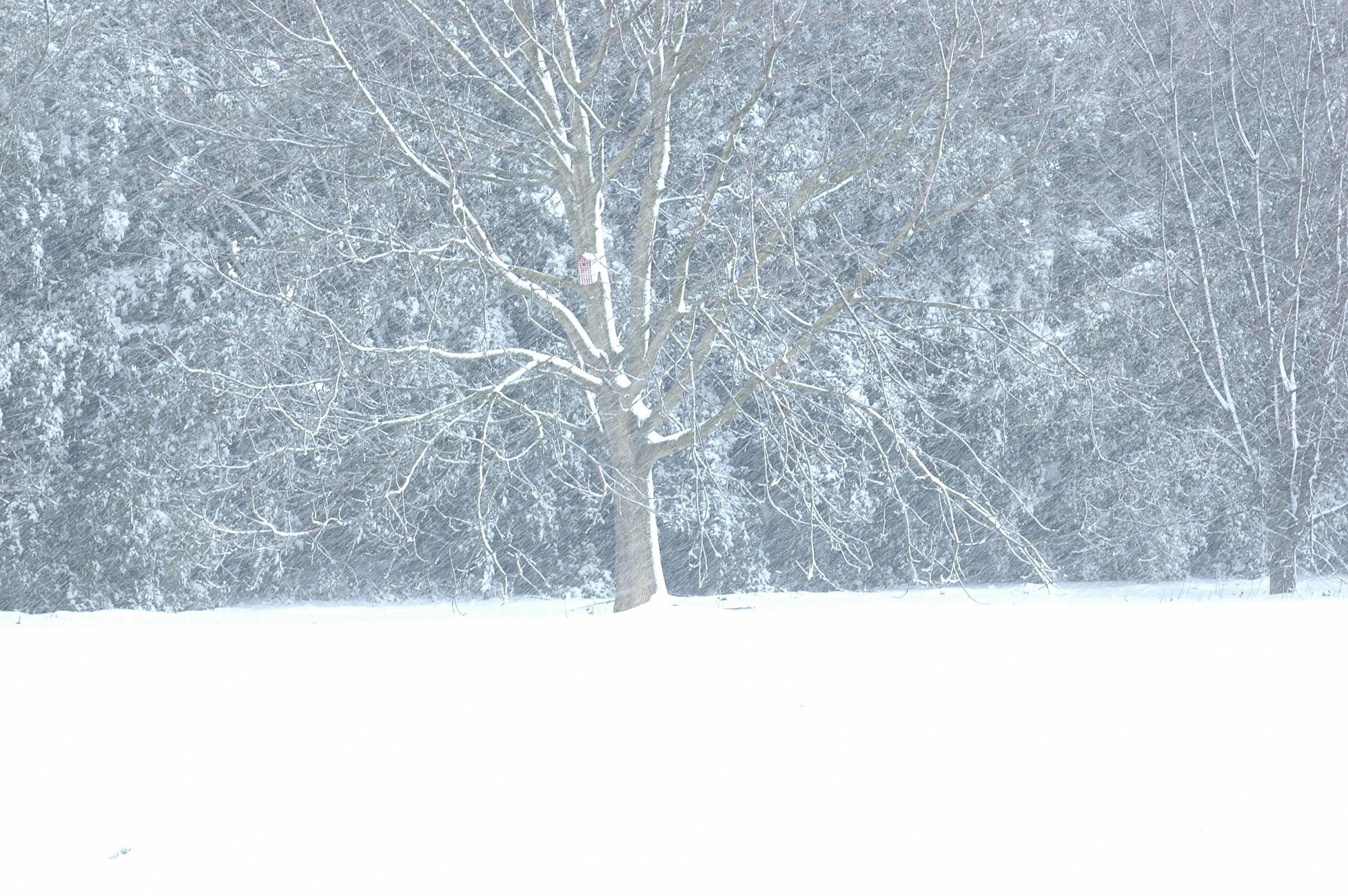 Snow ......