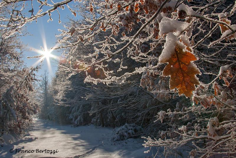 sentiero nella neve...