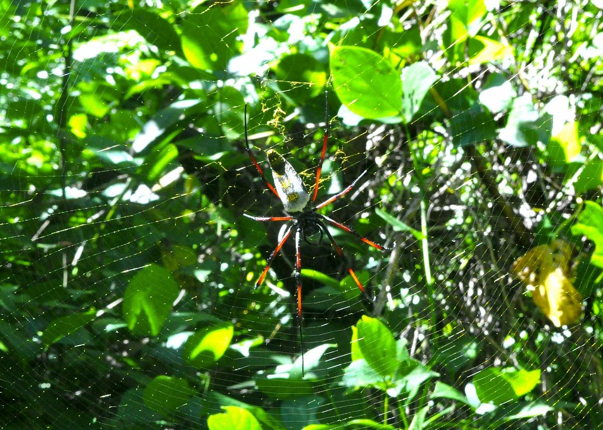 Spider to the sacred waterfall of Nosy Be...