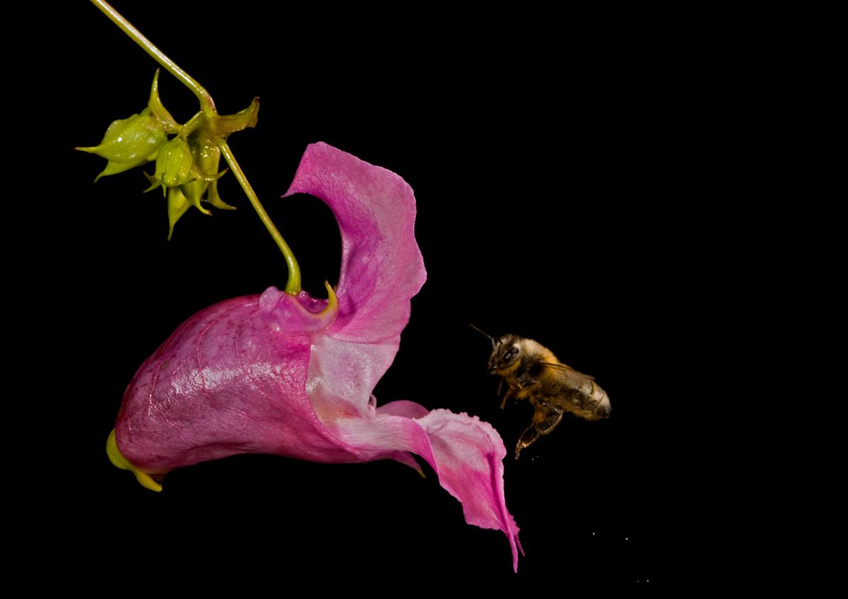 Bee & Balsam...