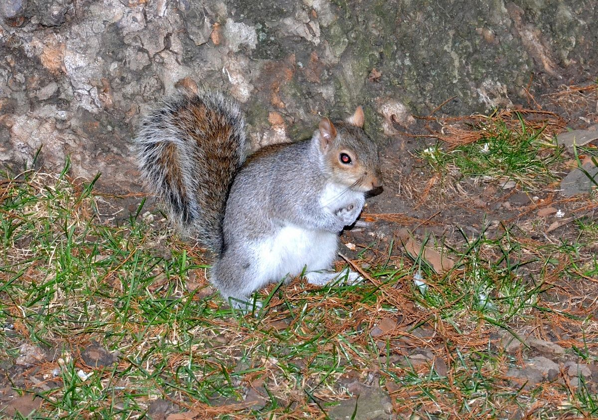 Squirrel in London...