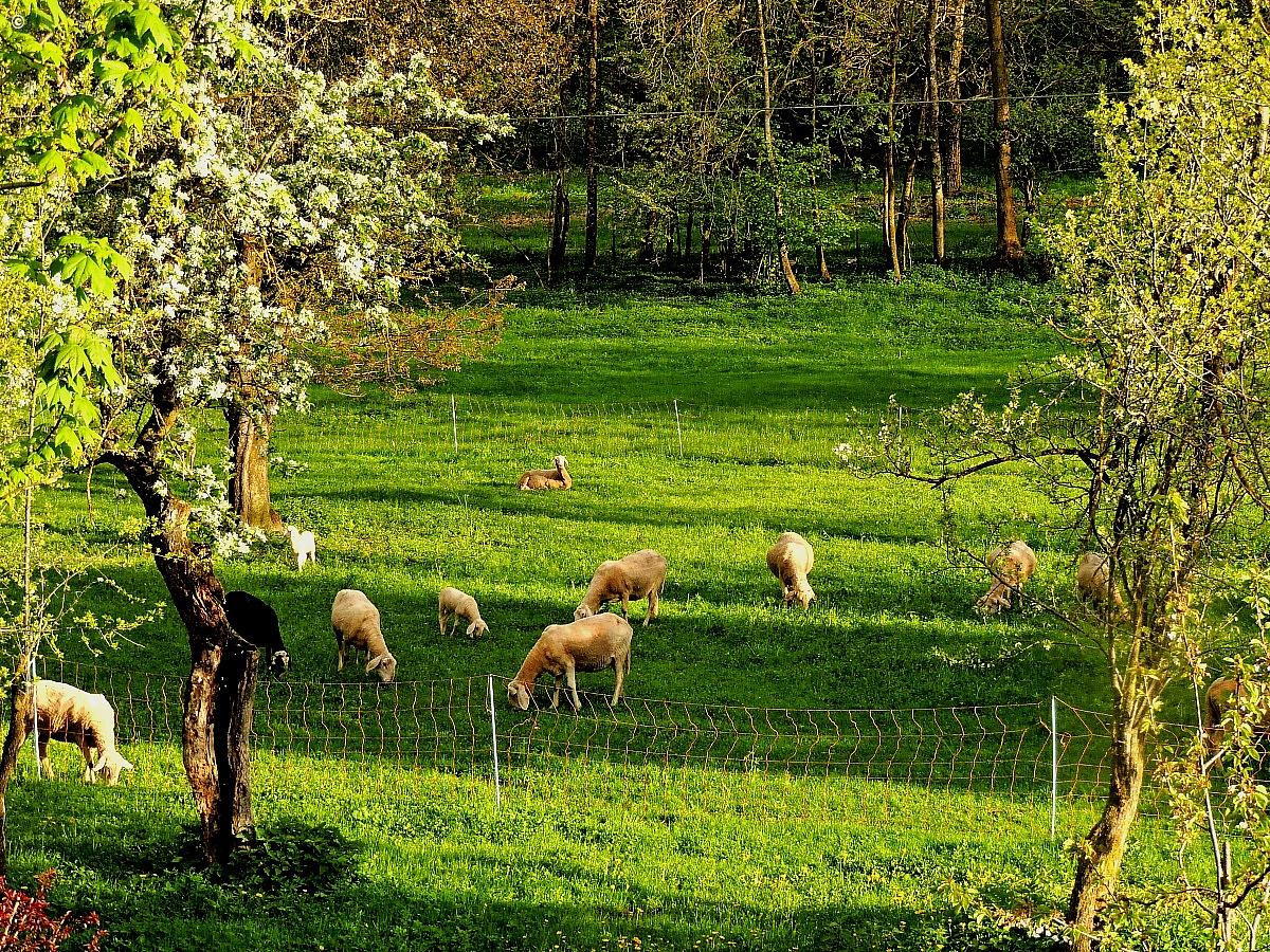 the flock...