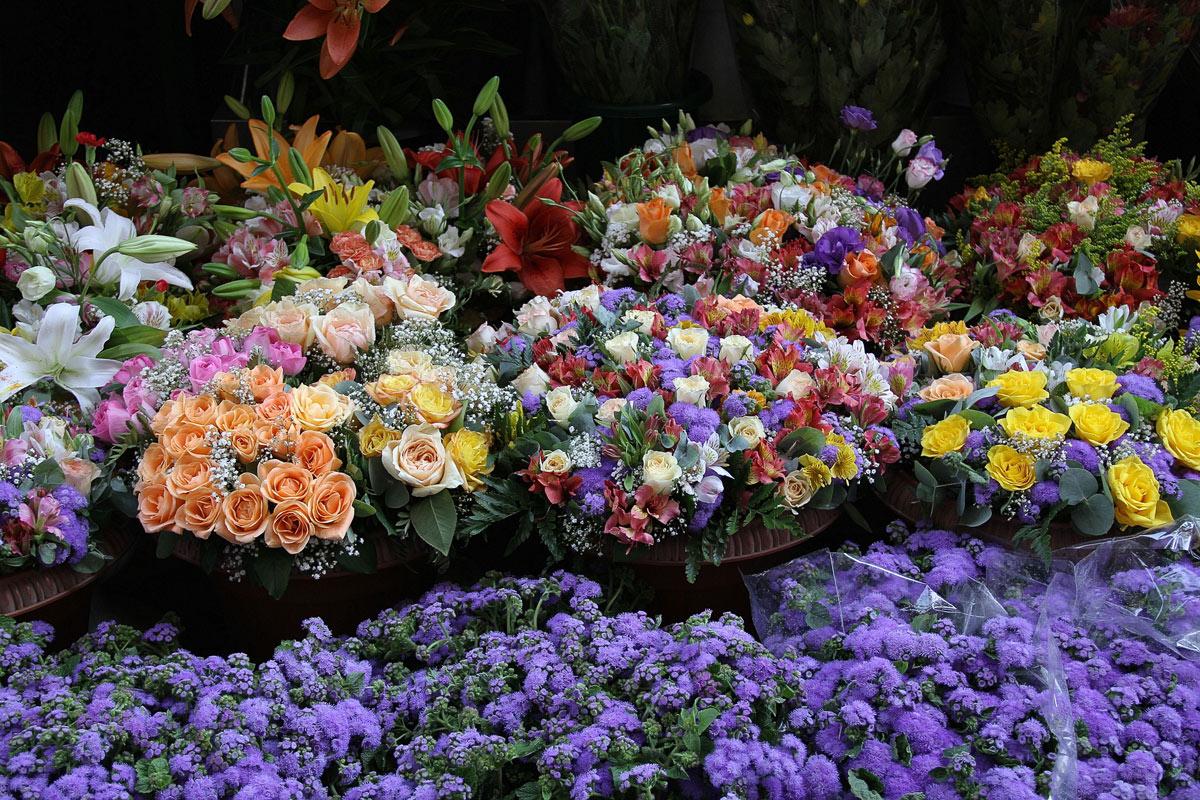 The joy of flowers...