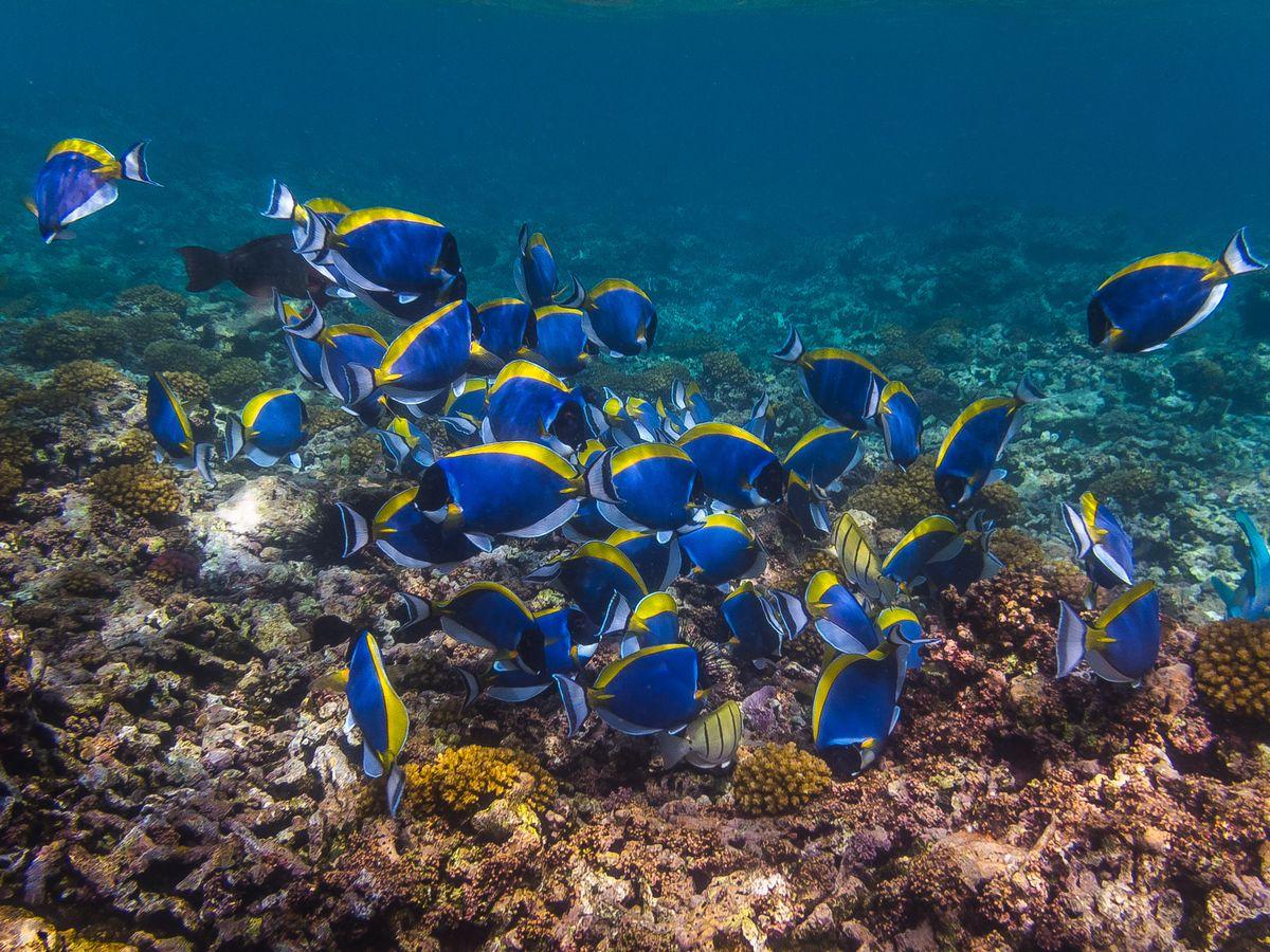 Seychelles - Leuosternon...