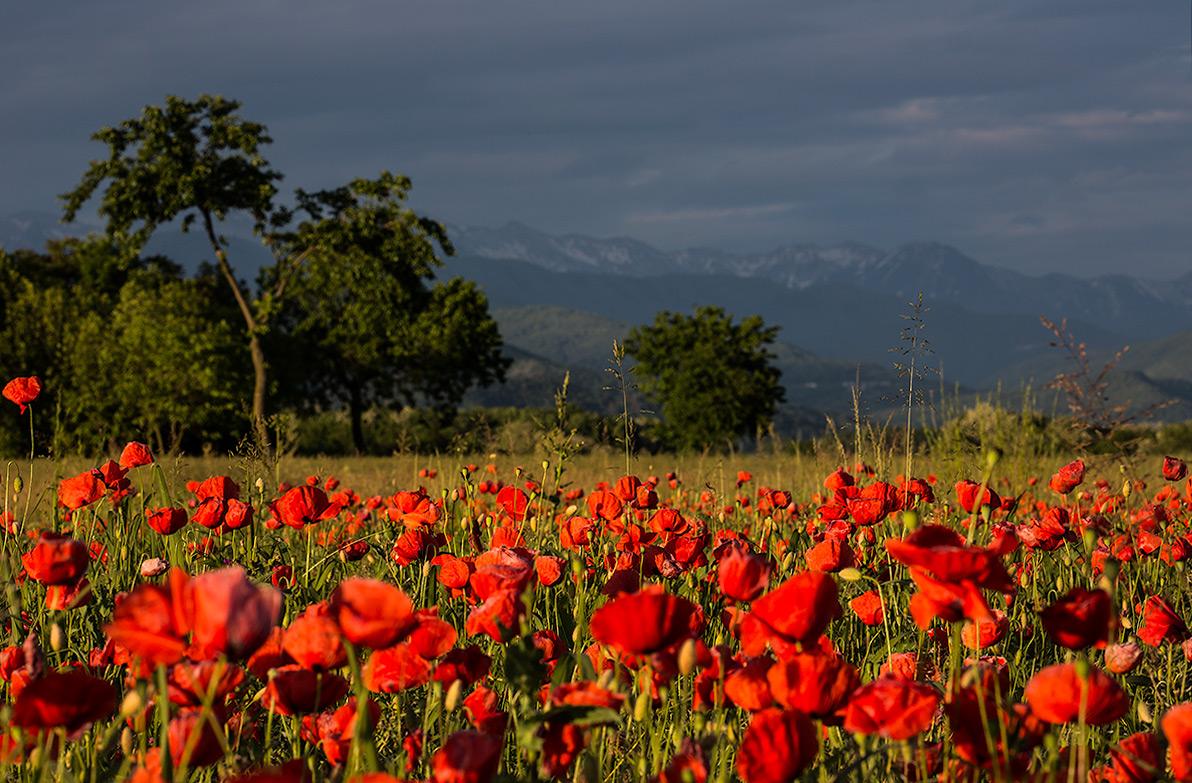 Mille papaveri rossi juzaphoto for Semplici paesaggi