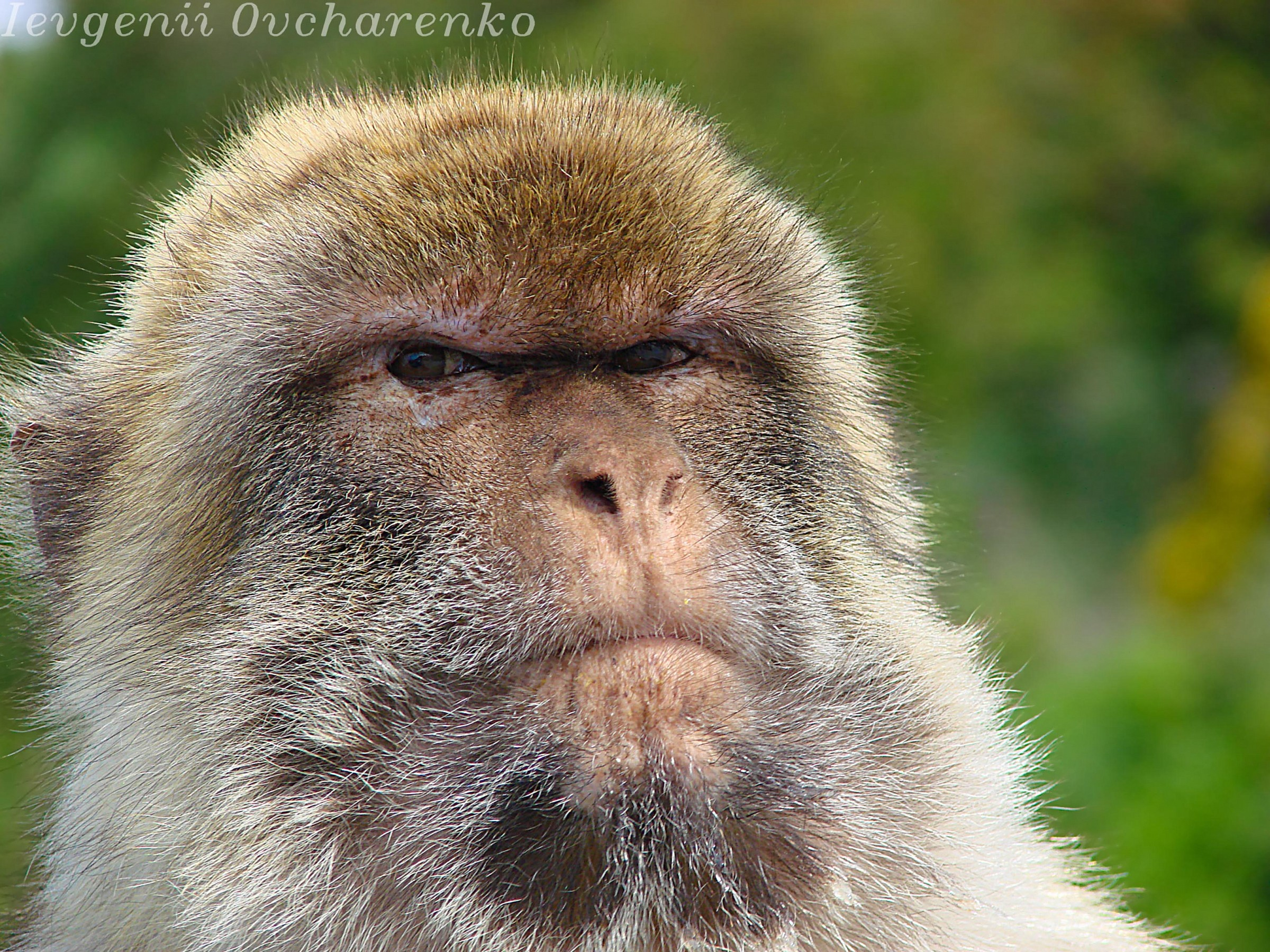 Monkey in Gibraltar...