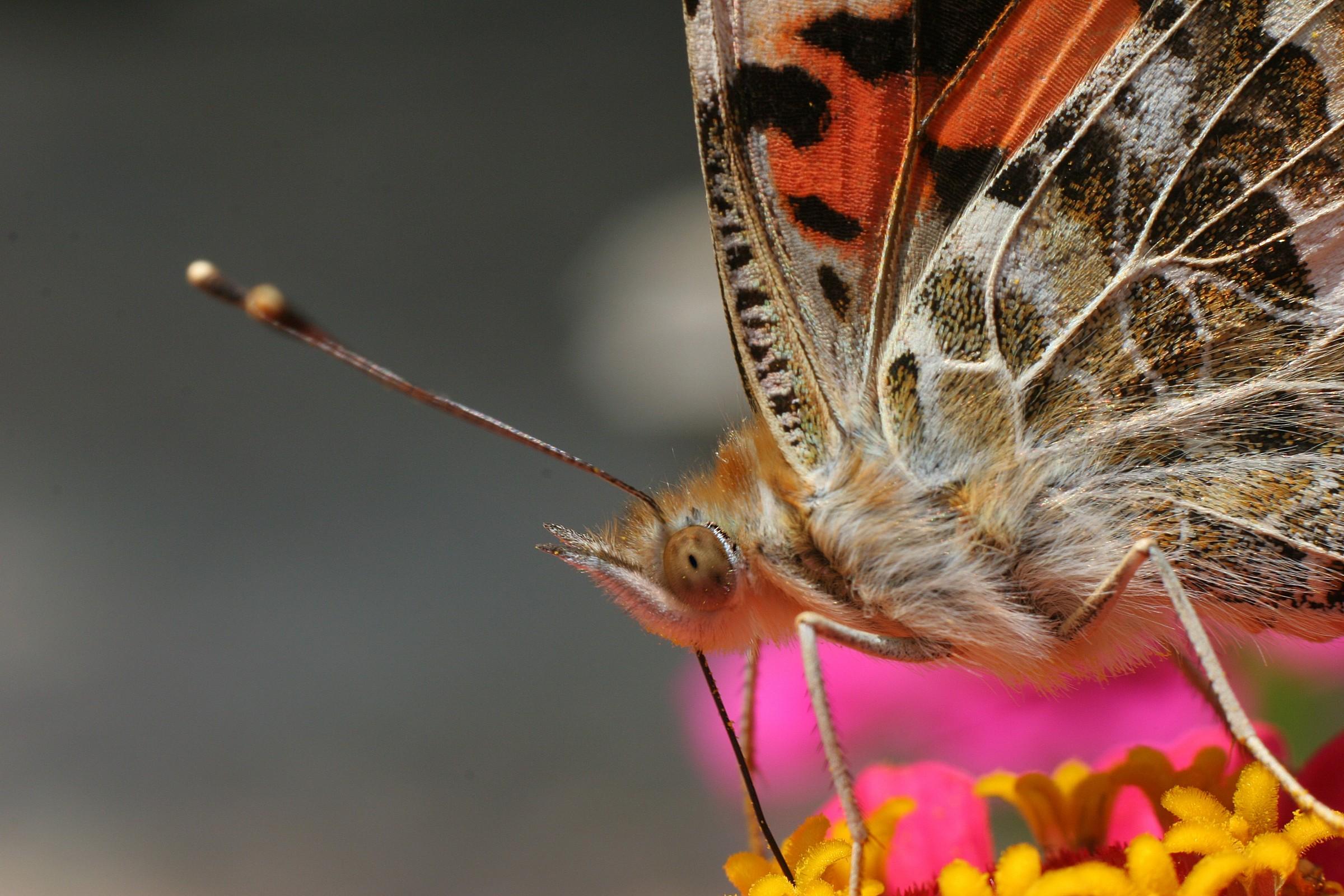 Profile butterfly...